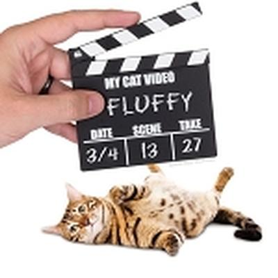 Click to get CAT VIDEO CLAPPER BOARD